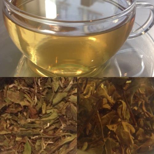 Tea Test Dalreoch Scottish White Tea - ©Chloé Chateau
