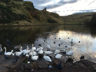 Swan in Holyrood Park's lake in Edinburg - ©Chloé Chateau