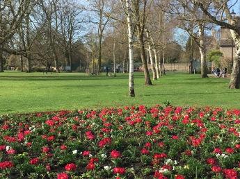 Walking around Cambridge Parks